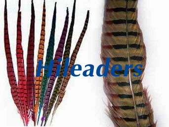 Pheasant feather