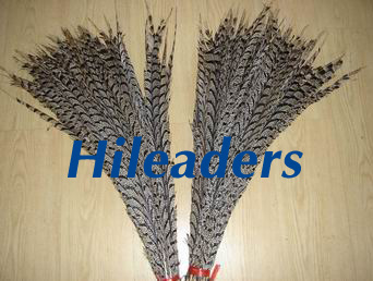 Lady center  Pheasant feather