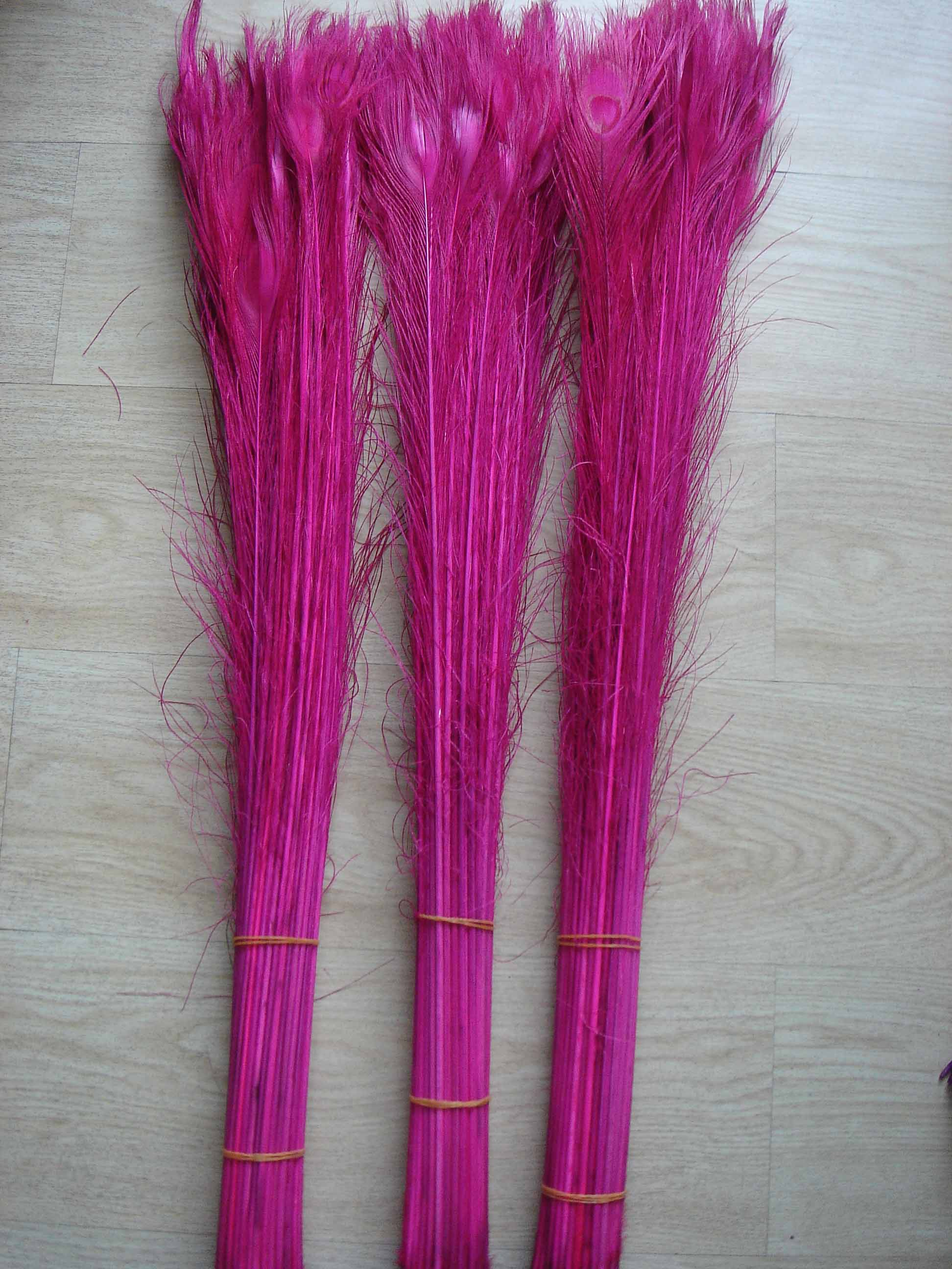 90-100cm dyed  Peacock feather