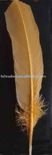 Turkey feather