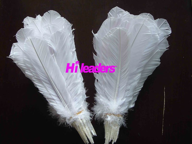 White Turkey feather