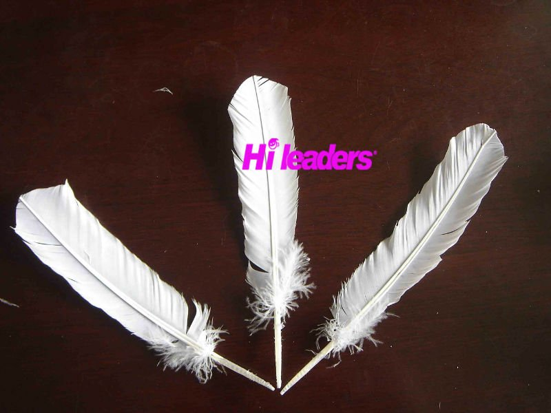 Decorative natural color  Turkey feather